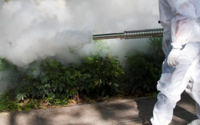 How Does Mosquito Fogging Work?